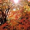眩しい秋色