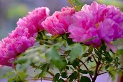 美しい花をどうぞ^ - ^