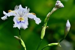 一輪の花 1
