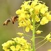 花粉集め競争しようで〜‼︎