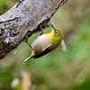 初めての小鳥の撮影