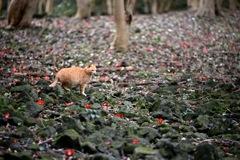 ツバキ林と猫