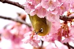 花粉まみれだよ〜