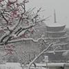 雪・梅の花・五重塔