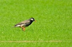 芝生を独り占め