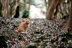 ツバキ林に憩う猫ちゃん