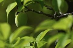 ひと枝の梅