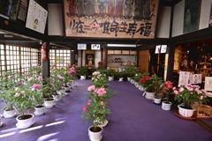 本堂に咲く冬牡丹