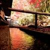 水面に映える秋色