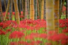 華やかな竹林