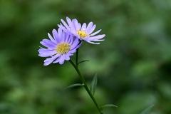 魅了する紫色の花