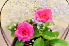 バラとかすみ草のコラボ