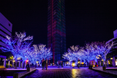 百道浜 イルミネーション 福岡タワー