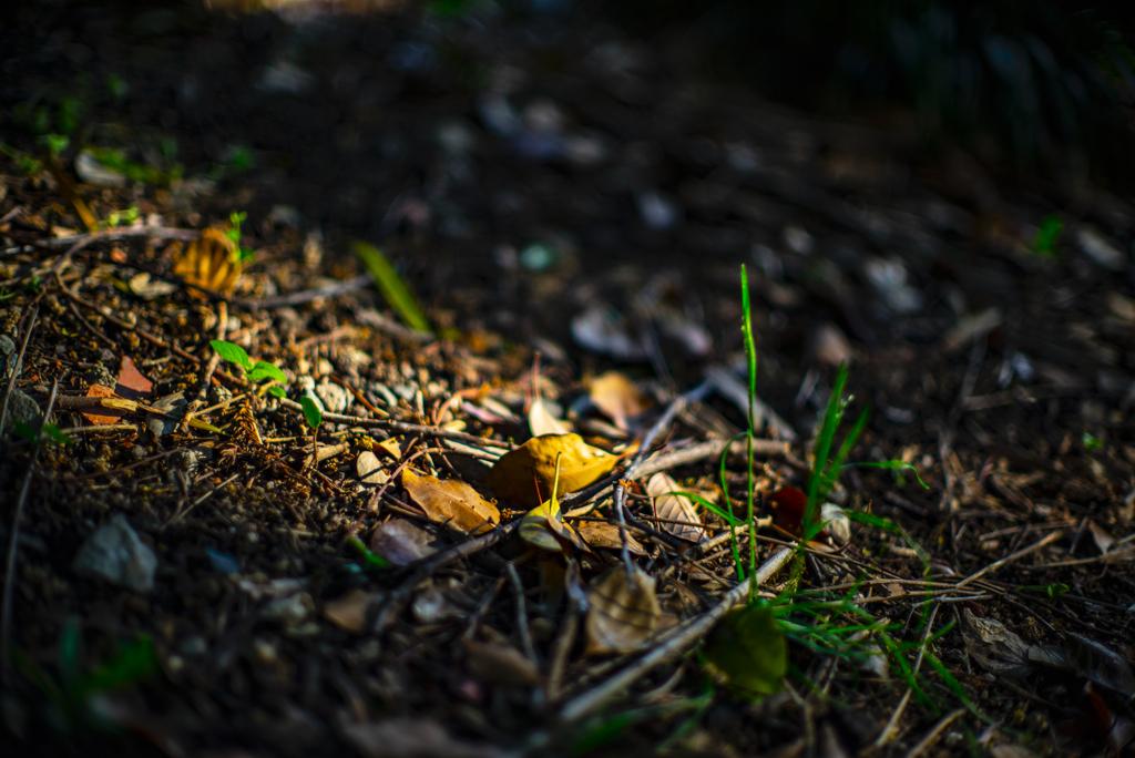 落ち葉溜まり