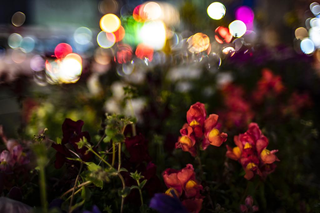道路の花壇