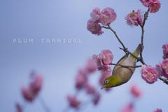 plum carnival