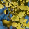 レモン色の秋2