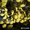 レモン色の秋