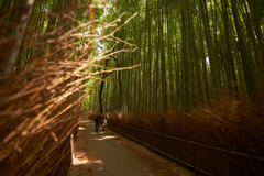 昨日は竹林の木漏れ日が良かったです。