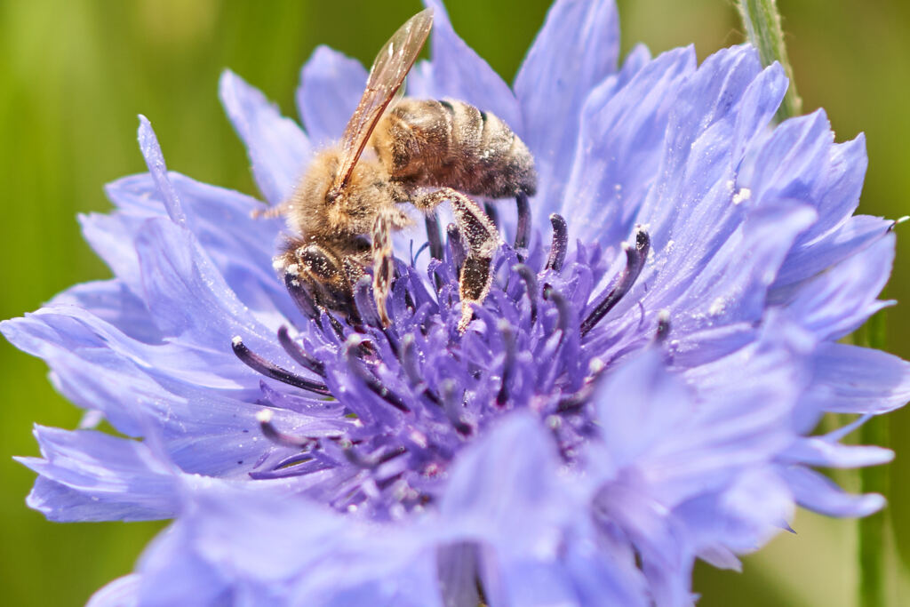 花粉がたっぷり。