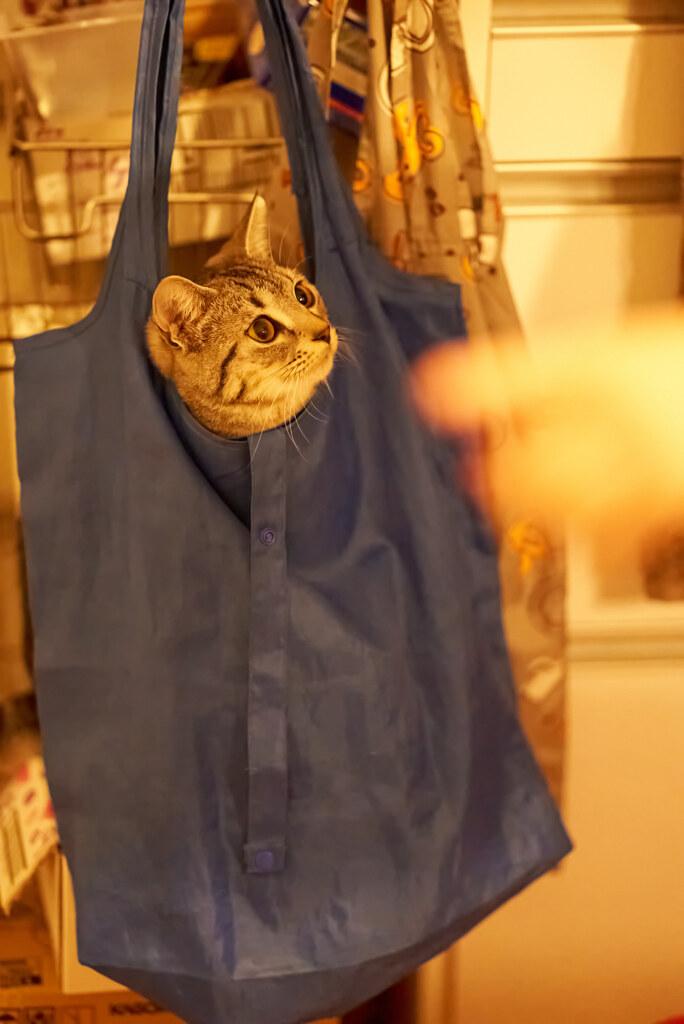 台所の侵入者。