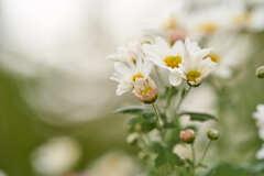 住吉駅周辺の花です。