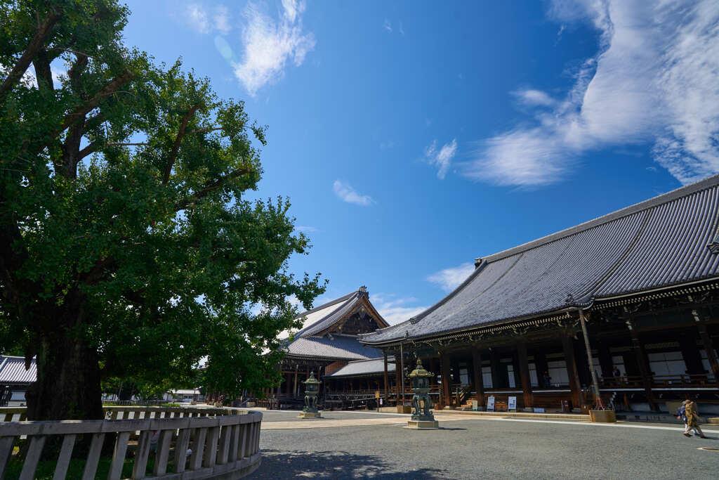 西本願寺の逆さ銀杏です。