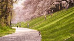 桜ひらひら気持ちいいにゃ。