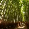 嵐山の竹林です。