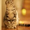 猫の肖像。
