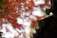 東福寺の紅葉です。