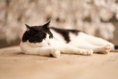 荒木神社周辺の猫ちゃんです。