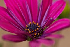 近所のマンションの花壇の花です。