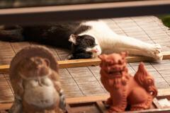 稲荷山の猫と狸とシーサーです。