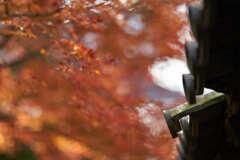 東福寺の瓦と紅葉です。
