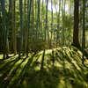 南禅寺の天寿庵中の竹林です。