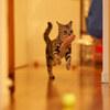 猫五輪準備中。