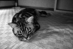 レオ 白黒