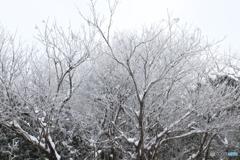 雪化粧の森_③