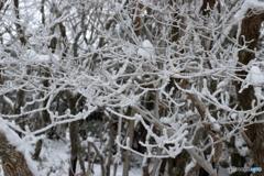 雪化粧の森_②