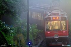 雨のあじさい電車