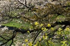 桜のある絵1
