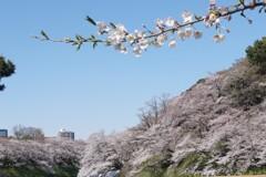 桜のある絵2