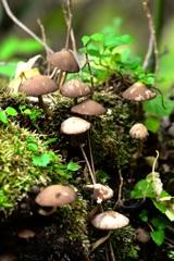 森のキノコ観測会  ♯3