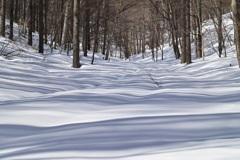 波打つ雪面と木の影