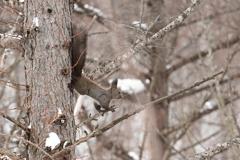 冬の森の元気者