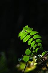 森の中のスポットライト