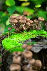 森のキノコ観測会  ♯2