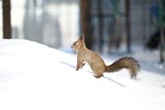 冬庭 小さな訪問者