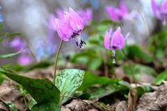 花の季節の前奏曲